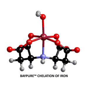 Baypure Blog Image 1-01